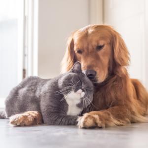 ペットの臭い対策に脱臭機はどうなのか?