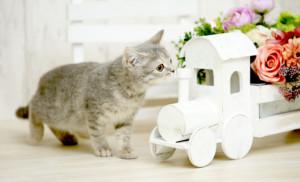 ペットの匂い 空気清浄機